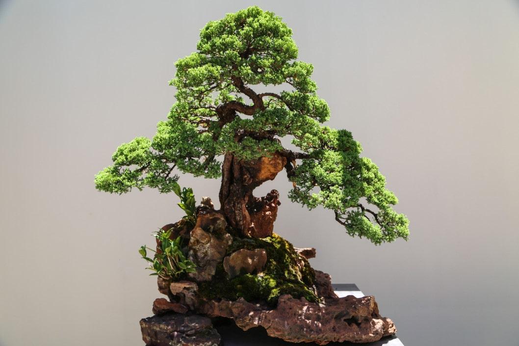 take care of a bonsai